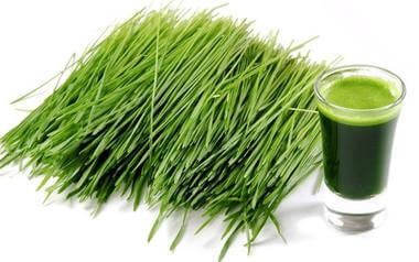 młody zielony jęczmień na odchudzanie